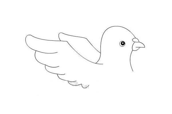 关于和平鸽的简笔画