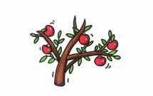 挂满树枝的苹果简笔画