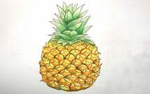 非常真实的菠萝简笔画