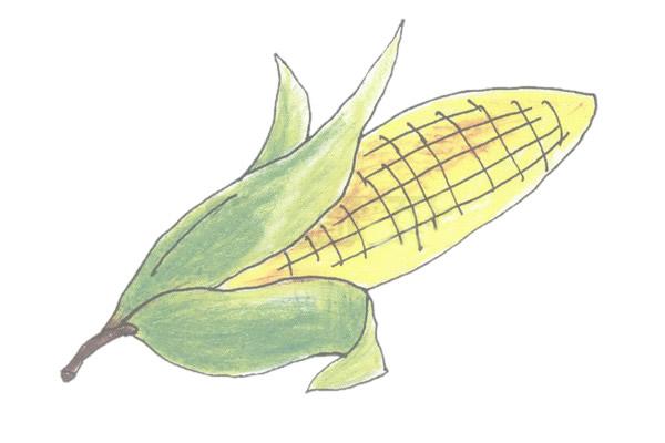 玉米简笔画的画法