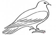 简单的鸽子怎么画