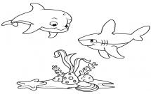 海底世界海豚和鲨鱼简笔画