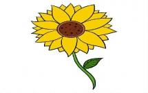带颜色的向日葵简笔画