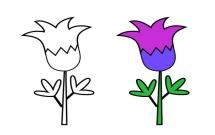 5中不同的花朵简笔画