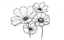 关于花朵的简笔画