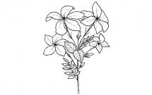 小花怎么画简单又好看
