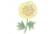 向日葵简笔画的画法步骤