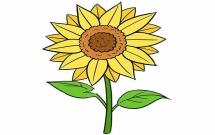 涂色的向日葵简笔画