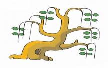 春天的柳树简笔画