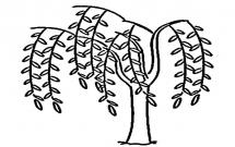 适合幼儿的柳树简笔画