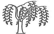 简单易学的柳树简笔画