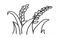 关于麦穗的简笔画
