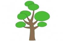 带颜色的松树怎么画