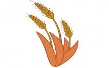 关于麦穗的儿童简笔画