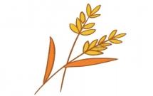 麦穗怎么画简单又好看